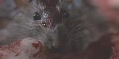 Cmentarna szychta (1990) – 15