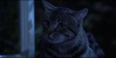 Oko kota (1984) – 13