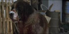 Oko kota (1984) – 03